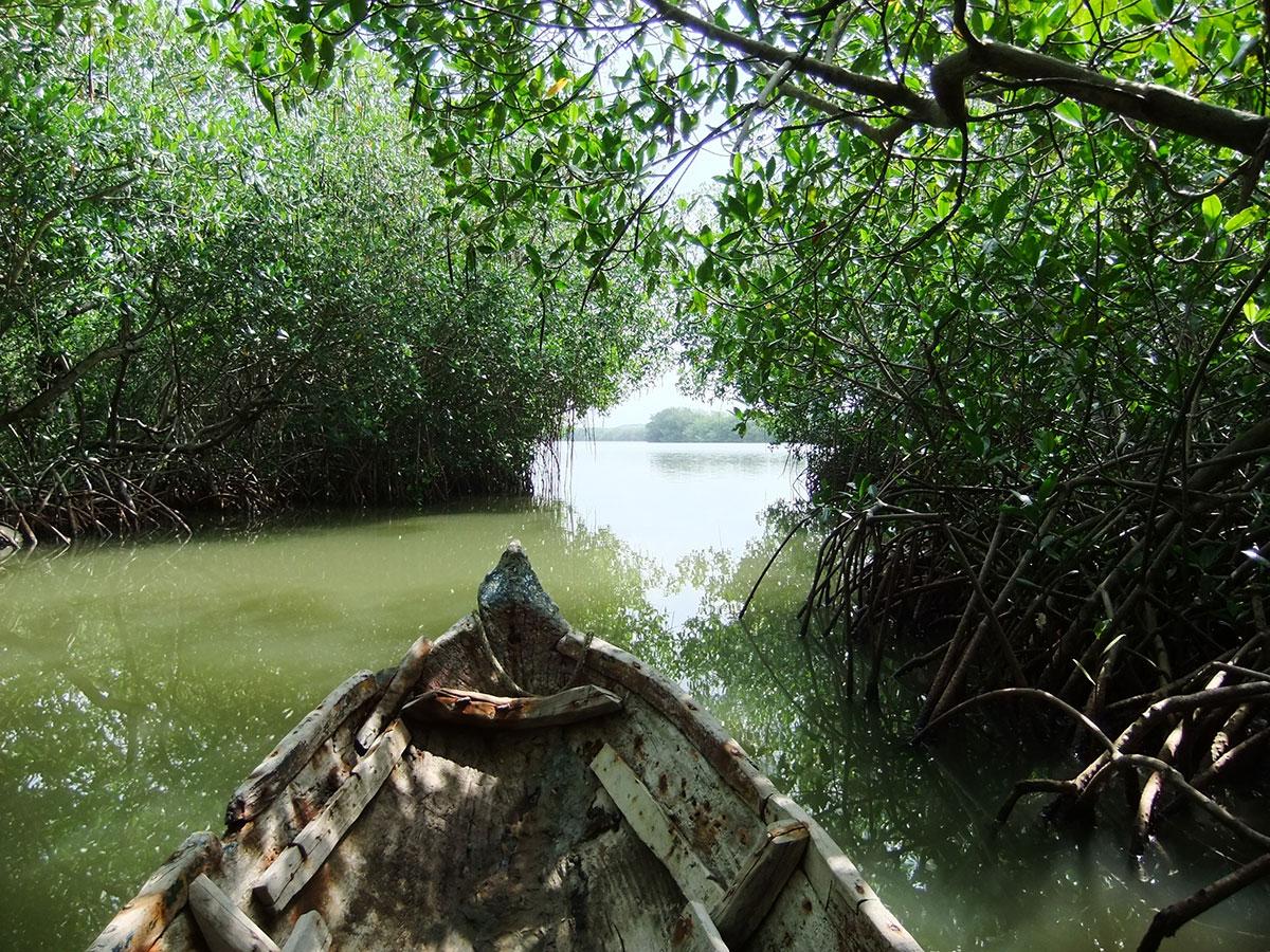 cartagena-tours-manglares-de-cartagena-3